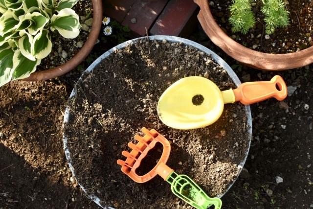 植物を育てるのはモンテッソーリの一環